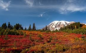 Mount Rainier National Park, Montagne, autunno, alberi, paesaggio