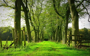поле, дорога, деревья, забор, пейзаж