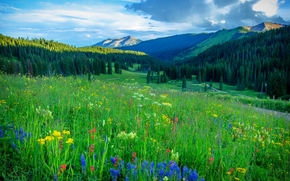 campo, Flores, Montañas, árboles, carretera, paisaje, Colorado