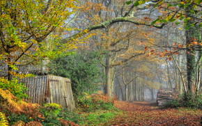 autunno, foresta, parco, alberi, stradale, fienile, paesaggio