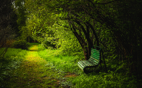 park, trees, road, A bench, light, landscape