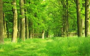 парк, лес, деревья, тропинка, забор, пейзаж