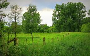 поле, деревья, забор, пейзаж
