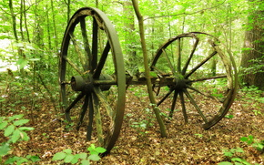 природа, древние колёса от телеги, деревья, лес