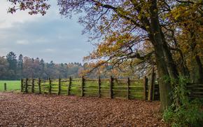 осень, деревья, забор, пейзаж