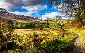 campo, Hills, otoño, árboles, sendero, paisaje