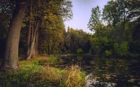 otoño, bosque, árboles, lago, naturaleza