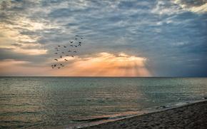 playa, mar, arena, tarde, puesta del sol, cielo, nubes, pájaros, Yevpatoriya, Crimea, Rusia, naturaleza, paisaje