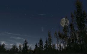 night, tree, trees, moon, sky, Star, autumn, landscape