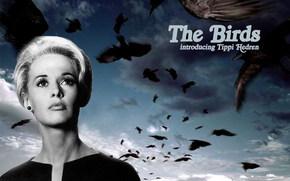 Птицы, The Birds, фильм, кино