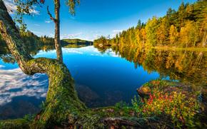 Buskerud, Noruega, Hurum, S?tre, lago, ?rvore, floresta, reflex?o