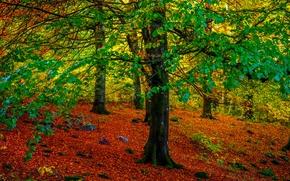 bosque, árboles, otoño, naturaleza