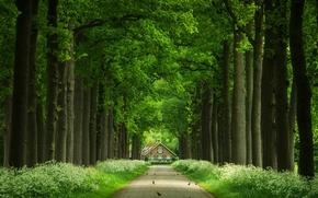 Straße, Bäume, Zuhause, Vögel, Landschaft
