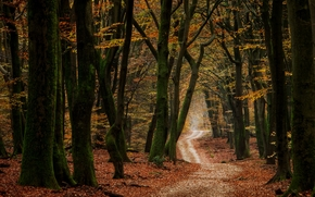 autumn, road, forest, trees, nature