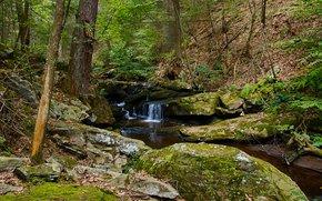лес, деревья, речка, водопад, скалы, природа