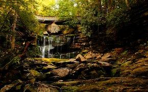 bosque, árboles, cascada, Rocas, puente, naturaleza