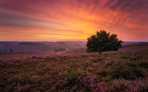 puesta del sol, campo, Hills, árbol, paisaje