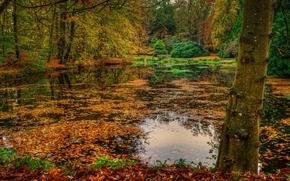 秋, 公园, 森林, 湖, 树, 桥, 景观