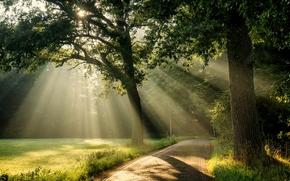 parc, route, arbres, soleil, paysage