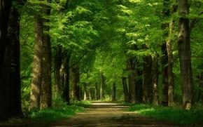 森林, 树, 道路, 景观