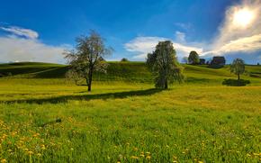 campo, Hills, árboles, paisaje