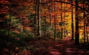 秋, 森林, 树, 阡, 性质