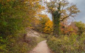 outono, estrada, árvores, paisagem