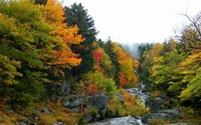 лес, деревья, осень, речка, скалы, водопад, природа