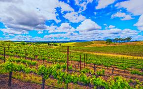 campo, viñedo, cielo, nubes, paisaje