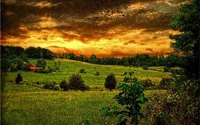 puesta del sol, campo, Hills, árboles, paisaje
