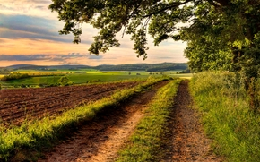 field, road, trees, landscape