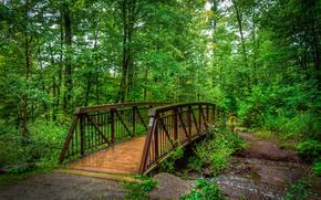bosque, pequeño río, árboles, puente, paisaje