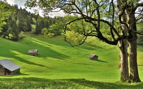 деревья, дома, холмы, пейзаж, поля
