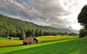 campo, Hills, árboles, casa, paisaje