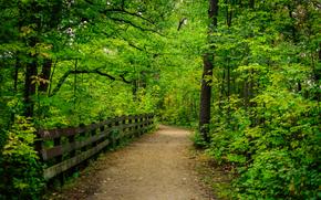 лес, деревья, дорога, забор, пейзаж