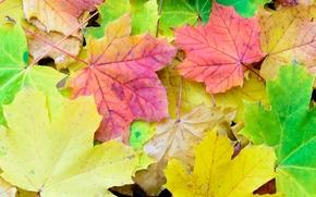 autumn, foliage, nature