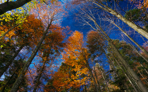 automne, arbres, couronne, supérieur, ciel, nature