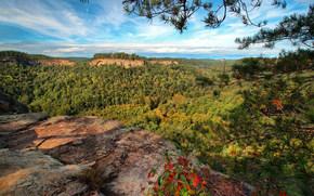 Red River Gorge, Chimney Top Rock, Daniel Boone National Forest, Slade, Kentucky, ущелье Ред-Ривер, Национальный заповедник Дэниел Бун, Слейд, Кентукки, горы, ущелье, лес, ветки, панорама