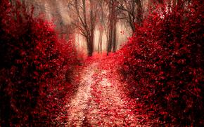 automne, route, arbres, forêt, nature