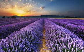 Salida del sol en los campos de lavanda, Provenza, Valensole, Francia