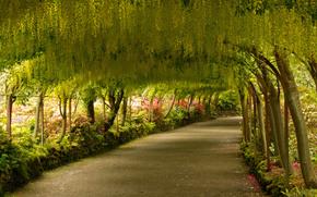 сад, парк, дорога, деревья, Конви, Северный Уэльс, Великобритания