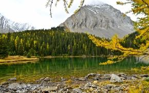 Chester Lake, Canadian Rockies, Alberta, Canada, озеро Честер, Канадские Скалистые горы, Альберта, Канада, осень, озеро, горы, лес, ветки, лиственница