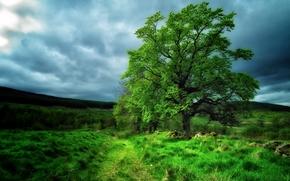 campo, Hills, árbol, NUBES, paisaje