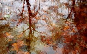 automne, eau, étang, gouttes, nature