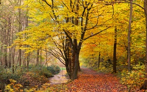 autumn, park, forest, trees, road, nature