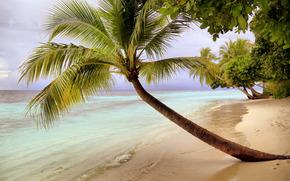 mare, țărm, Palms, peisaj