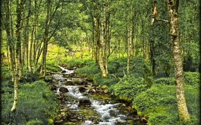 forest, river, trees, nature