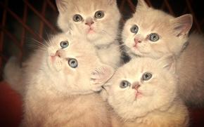 взгляд, животные, котята
