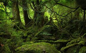 пейзаж, зелень, мох