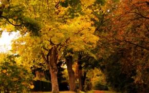 automne, parc, forêt, arbres, route, paysage